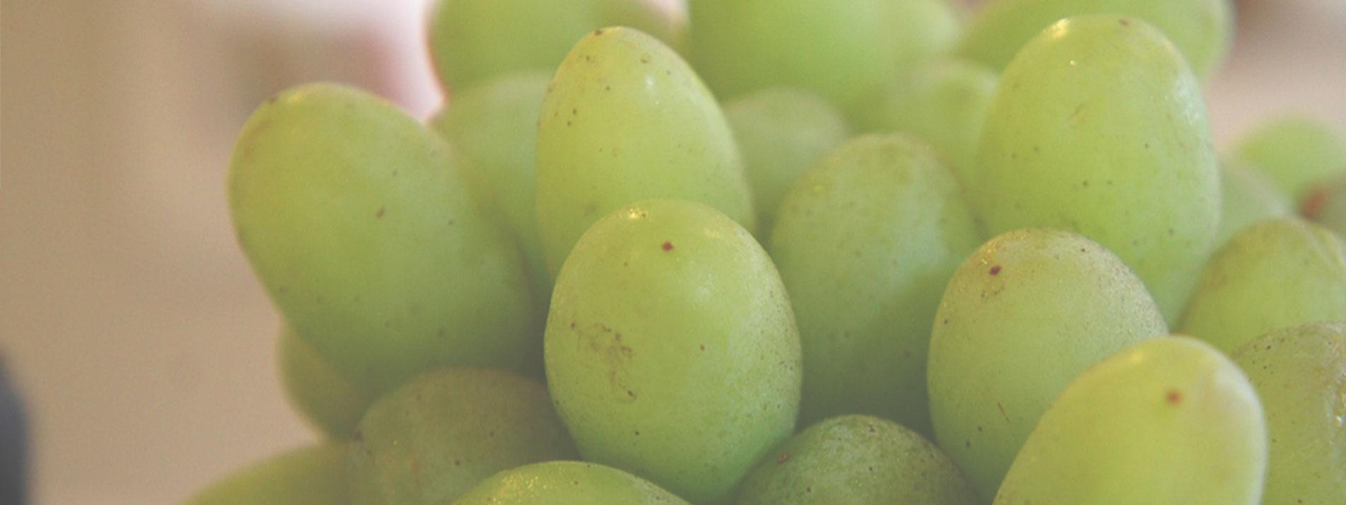 banner_grapes